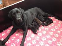 Penny en pups