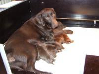 Sara pups